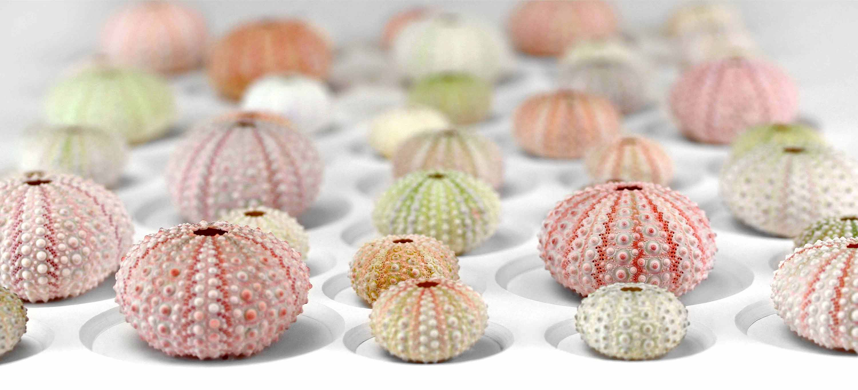 p70_Pastel-Urchin-Mosaic-website-banner-low-rez-1