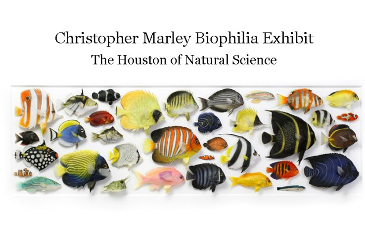 Christopher Marley Biophilia Exhibition, The Houston Museum Feb 8 – Sept 2 , 2019